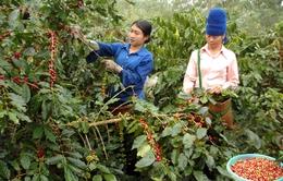 Sẽ tôn vinh nông dân tiêu biểu tại Lễ hội cà phê 2017