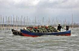 Quảng Ninh công bố đường dây nóng bảo vệ nguồn lợi thủy sản
