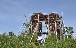 Quảng Nam: Bảo vệ khẩn cấp di tích Phật viện Đồng Dương