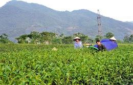 Khuyến khích nhân rộng mô hình liên kết trong nông nghiệp