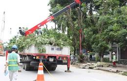 Chưa thể di chuyển cây xanh tại đường Kim Mã