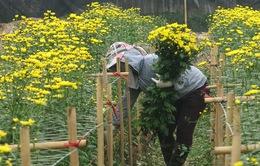 Làng hoa Tây Tựu đón nhận danh hiệu làng nghề truyền thống