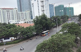 Hà Nội bắt đầu di dời cây xanh trên đường Kim Mã
