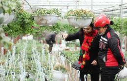 Tết đã về trên làng hoa lớn ven Hà Nội