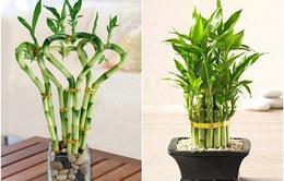 7 Loại cây cảnh nên trồng tại văn phòng làm việc