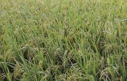 Hội thảo thử nghiệm phân bón sinh học công nghệ nano cho nông dân trồng lúa