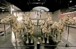 Đội quân binh mã đất nung của Tần Thủy Hoàng 'di cư' đến Mỹ