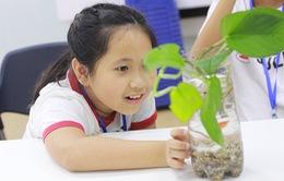 Học sinh trường Ams mở hội trại khoa học độc đáo cho trẻ nhỏ