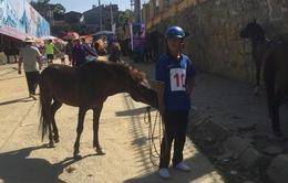 VIDEO: 'Chết cười' với màn đua ngựa Bắc Hà