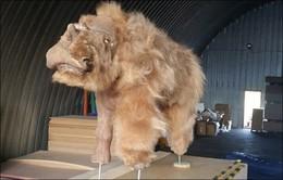 Xác tê giác chôn vùi 34.000 năm dưới lớp băng tuyết còn nguyên lông và sừng