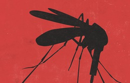 INFOGRAPHIC: Những điều cần lưu ý về dịch sốt xuất huyết tại Việt Nam