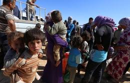 Cuộc sống trong chợ nô lệ trẻ em của IS