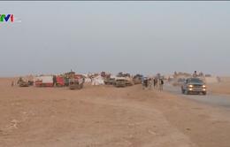 Tay súng IS giảm mạnh tại Iraq và Syria