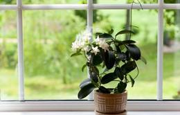 Những loại cây đặt trong phòng tốt cho giấc ngủ của bạn