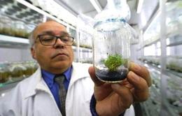 Chiết xuất kem chống nắng từ thực vật Nam Cực
