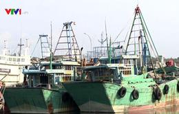 Kiên quyết ngăn chặn khai thác hải sản trái phép