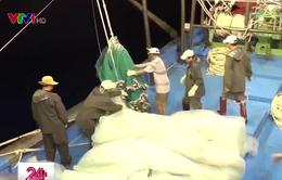 Phú Quý phát triển khai thác thủy sản bằng mành chụp