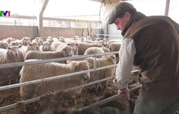 Anh cắt giảm kháng sinh trong chăn nuôi