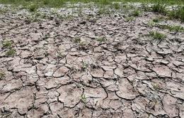 Khô hạn khiến nông dân Italy thiệt hại 1 tỷ Euro