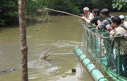Trải nghiệm du lịch cảm giác mạnh đi thuyền câu cá sấu giữa đầm