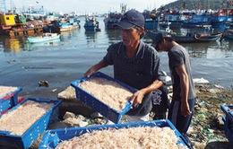 Ngư dân Hà Tĩnh trúng đậm mùa ruốc đầu xuân