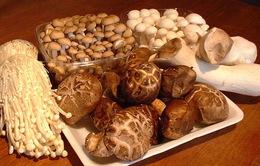 Nấm được nuôi trồng kiểu Nhật đảm bảo an toàn và dinh dưỡng