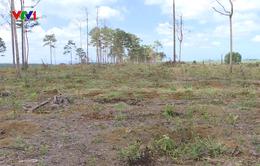 Lâm Đồng thu hồi 3 dự án thuê rừng ở Bảo Lâm