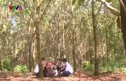 Doanh nghiệp trồng rừng Phú Yên đầu tiên tham gia Mạng lưới kinh doanh lâm sản toàn cầu