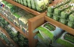 Lâm Đồng: 218 doanh nghiệp nợ bảo hiểm xã hội
