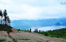 """Chiêm ngưỡng thiên nhiên tươi đẹp vùng cao Hà Giang qua phim Việt """"Lặng yên dưới vực sâu"""""""