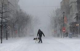 Lạnh cóng bao trùm khắp Bắc Mỹ và châu Âu, một số người tử vong