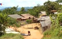 Cuộc sống bấp bênh của những hộ di cư bất hợp pháp sang Lào