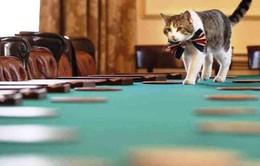 Mèo Larry và sự vững vàng giữa sóng gió chính trường Anh
