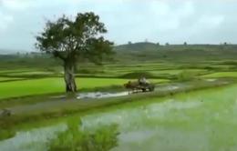 Chất lượng phim truyện tham dự Liên hoan phim Việt Nam