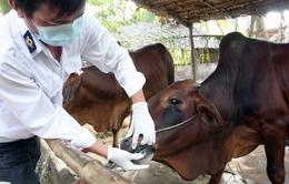 Xuất hiện dịch lở mồm long móng ở Hà Tĩnh