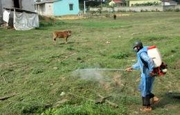 Xuất hiện bệnh lở mồm long móng ở tỉnh Kon Tum