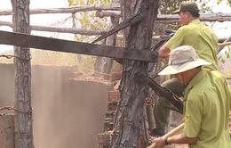 Đăk Lăk: Phá lò đốt than để bảo vệ rừng Ea Súp