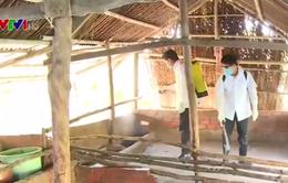 Xuất hiện ổ dịch lở mồm long móng ở Cà Mau