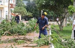 Dông lốc làm đổ nhiều cây xanh ở An Giang