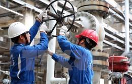 Nhà máy lọc dầu Dung Quất tiết kiệm 300 tỷ đồng nhờ giảm tiêu hao năng lượng