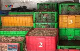 Bắt giữ gần 5 tấn phế phẩm nội tạng thối tại Đồng Nai