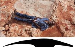 Tìm thấy 21 dấu chân khủng long tại Australia