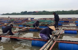 Tiền Giang: Gia cố các bè nuôi cá ứng phó bão Tembin