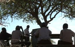 Lớp học dưới gốc cây của trẻ em nghèo tại Kenya
