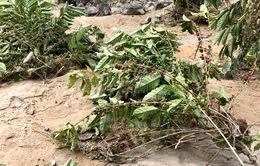 Hàng chục hộ dân ở Lâm Đồng bị thiệt hại do lũ quét bất ngờ