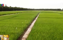 Sử dụng phân bón công nghệ cao giúp nông dân tăng thu nhập