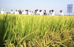 Quảng Trị đẩy nhanh tiến độ xây dựng thủy lợi cho vụ Hè Thu