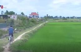 Không được nhận tiền hỗ trợ đất lúa, người dân Phú Yên bức xúc