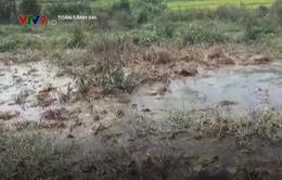 """Lâm Đồng: Nông dân """"khóc ròng"""" vì nạn chăn nuôi gây ô nhiễm đồng ruộng"""