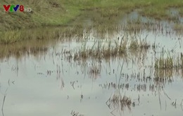 Khánh Hòa: Khai thác đất mặt ruộng khiến hàng chục ha ruộng ngập nặng